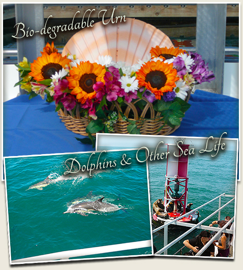 biodegradable urn and a pic of a dolphin in a collage for burials at sea service